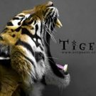 tigerfier